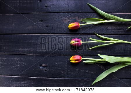 Three red tulips on rustic wooden background with spase for your text