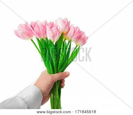 Beautiful Pink tulips flowers in hand isolated on white background. 8 march Mother's Day concept.
