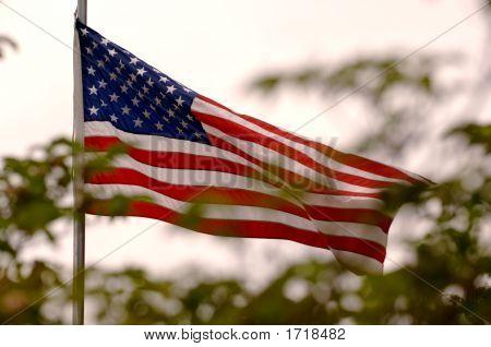 American Flag Through Trees