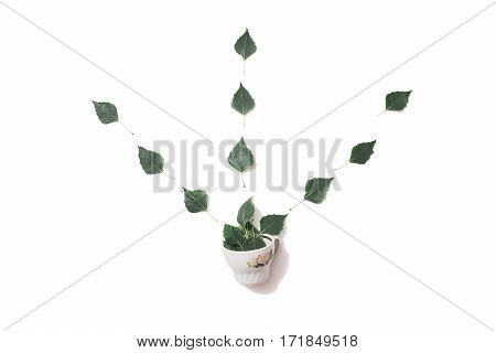 Teacup birch leaves isolated on white background. The composition of the leaves