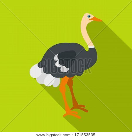 Ostrich icon. Flat illustration of ostrich vector icon for web