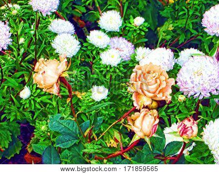 Цветочный фон с оранжевой розой и крупными астрами подойдет любителям создания коллажей