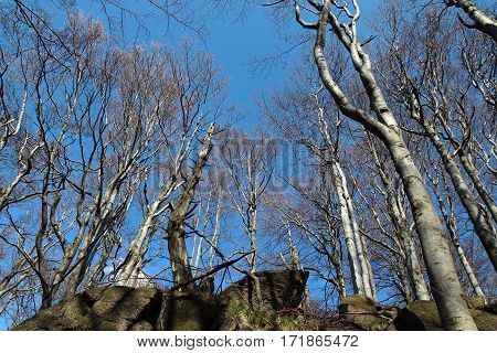 group of deciduous trees under blue sky without leaves