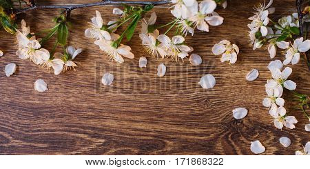 Border from fresh fragrant flowers cherry on retro background. Selective focus. Space for text. Flowering cherry on a wooden surface