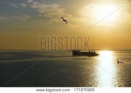 The sun rises over the strait, illuminates the seagulls and dry-cargo ship.morning over the sea