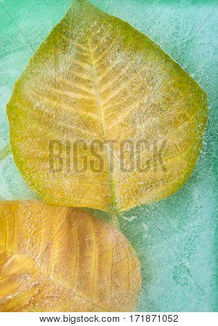 Frozen Flora Natural Background