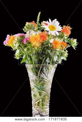 Vivid Colored Wild Flowers, Safflowers, Daisys, Close Up, Isolated Background