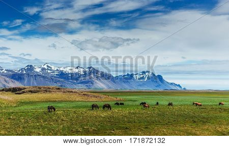 Riding in the mountains. Beauty world. Iceland
