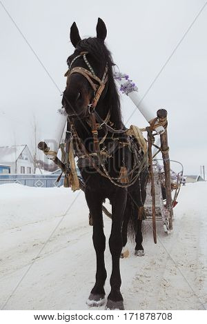 Black Horse In Harness On The Road In Winter Village