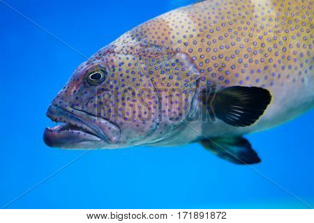 Big sea patterned fish on a blue deep ocean. Tinted old paper background. soft focus photo.