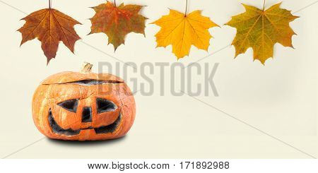 Halloween decoration template with orange pumpkin colorful maple leaves. Scary face holiday ornament object macro view, shallow depth of field, copy space