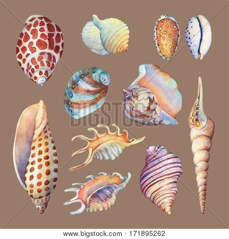 Set of underwater life objects - illustrations of various tropical seashells and starfish. Marine design. Hand drawn watercolor painting on brown background.