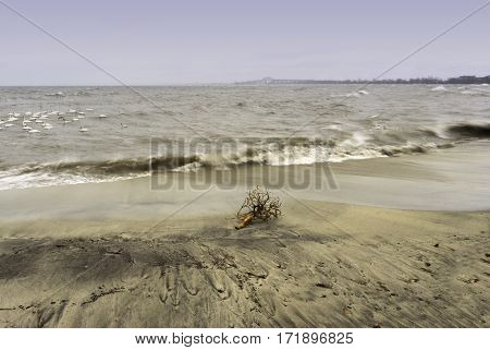 Driftwood stranded on a sandy beach a choppy lake with waves crashing birds near shore