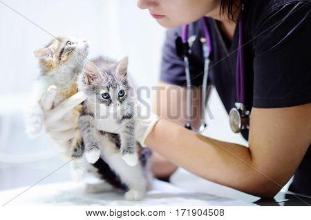 Veterinary Doctor Looking On Kitten