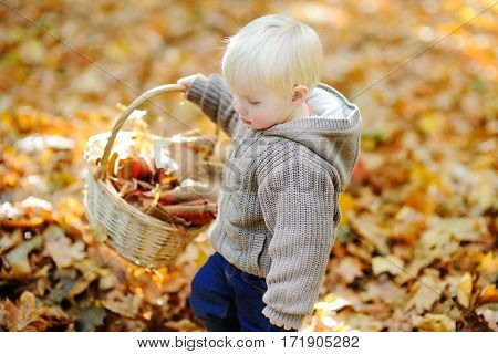 Little Boy Playing With Autumn Leaves