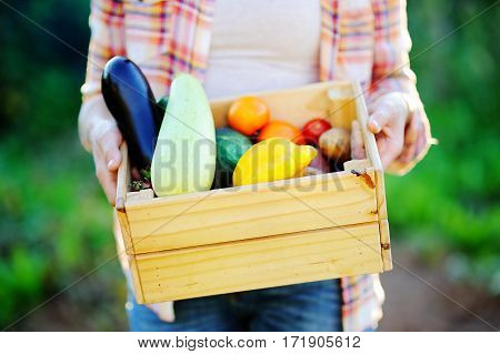 Close up photo of female gardener holding wooden crate with fresh organic vegetables from farm