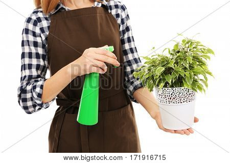 Female florist holding house plant and sprayer isolated on white background