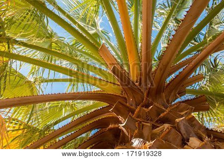 Looking Up At The Trunk Of A Palm Tree