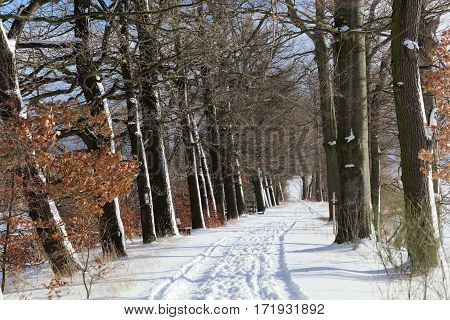A way in winter with trees and snow.