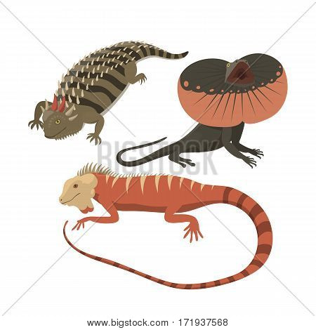 Different kinds of lizard reptiles isolated vector illustration. Wild cartoon nature dragon funny design. Reptile flat drawing body monster character.