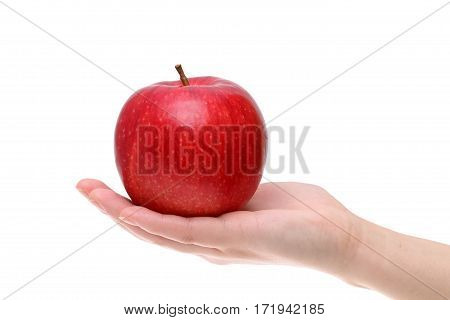 Red apple on the hand isolated on white background