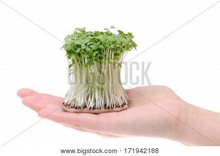 Radish sprout on the hand isolated on white background