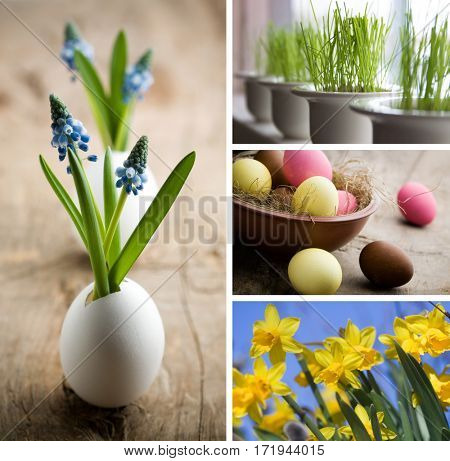 Bunch of muscari flowers growing from egg shell