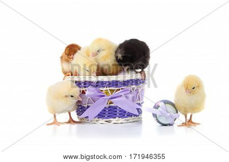 Fluffy Little Yellow Chickens And Easter Eggs On A White Background.