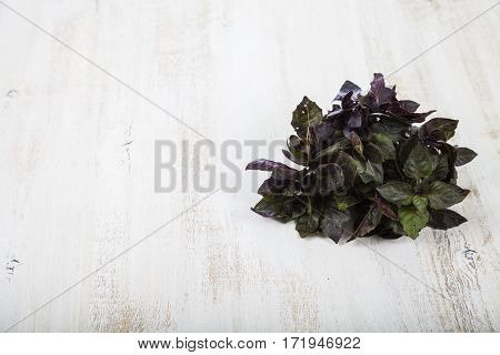 Fresh purple basil on a light wooden background. Herbs for cooking various dishes close up.