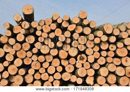 Pile of logs in forest North Lithuania