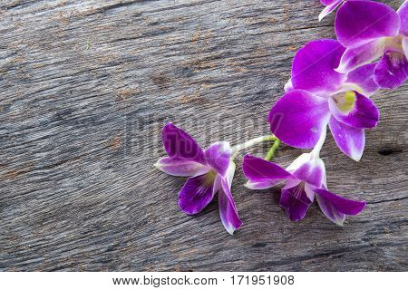 The beautiful Dendrobium orchid a on table