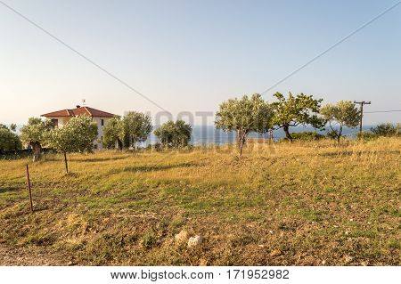 Greek Rural Landscape With Olive Groves And Blue Sea