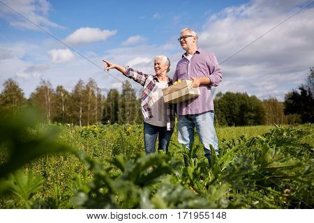 farming, gardening, agriculture, harvest and people concept - happy senior couple with box of squashes at farm