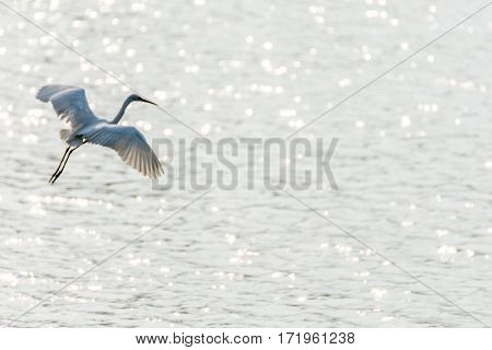 Bird (heron, Bittern Or Egret)