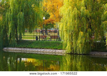 Willow and two benches near the pond. Reflected in water. Novodevichy big pond. Moscow.