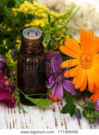 Wild Flower And Oil