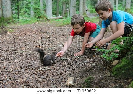 Two boys feed black squirrel in city park