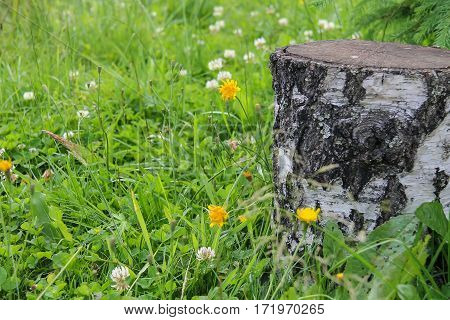 The stumps among green grass and wildflowers