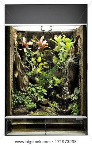 tropical rain forest terrarium or paludarium for exotic pet animals like poison dart frogs or treefrog. Pet animal cage.