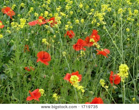 Wild_Flowers