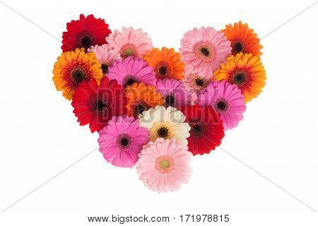 Heart shape of blooming colorfull gerbera flowers on a white background
