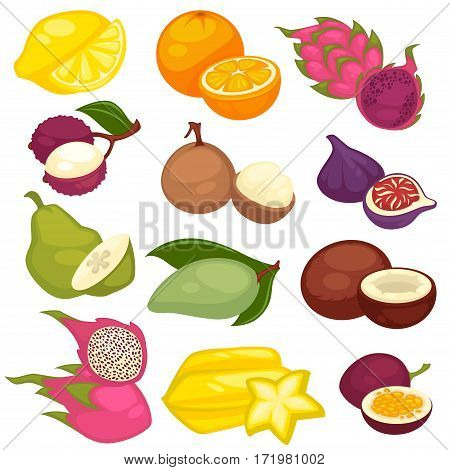 Tropical fruits set. Citrus lemon and orange, exotic pitaya and sweet granadilla, fleshy mayan, fig and kandis, green avocado and quince, star shape carambole and coconut isolated vector illustration