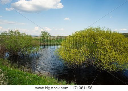 Bushes of ivy in small river in village, surrounded by green grass along the coast. Rural landscape natural scenery