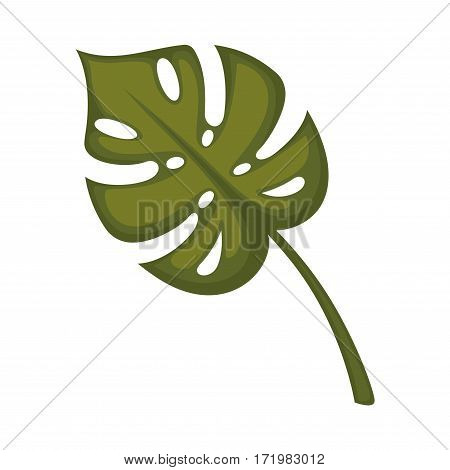 Monstera leaf isolated on white. Tropical jungle unusual leaves with natural holes realistic vector illustration. Pot plant widely used in home decor, big leaves used in flower bouquets composition