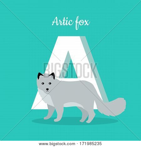 Animals alphabet. Letter - A. White arctic fox near letter. Alphabet learning chart with animal illustration for letter and animal name. Vector zoo alphabet with cartoon animal on blue background