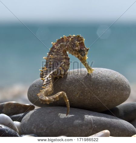 Sea Horse on a rock on the shore of the bay in the summer