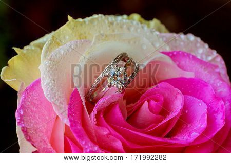 Desire, Love And Valentine's Day