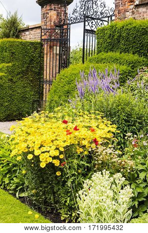 Herbaceous border in a well tended garden with perennial flowering plants.