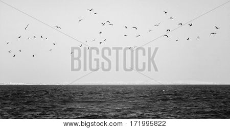 Flock Of Seagulls Flying Over The Sea In Black And White