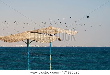 Flock Of Seagulls Flying Over The Beach With Thatched Umbrellas And Sea